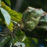 Колония муравьев на дереве