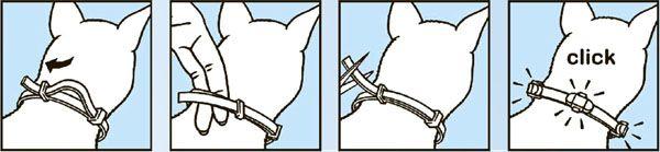Схема надевания ошейника на собаку