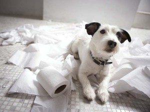 профилактика запоров у собаки