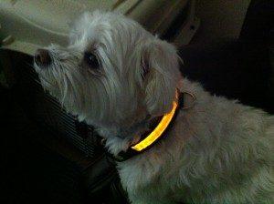 светодиодный ошейник для маленьких собак