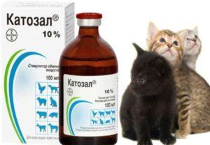 Для кошек витамин В12