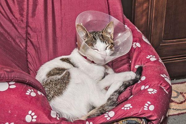 Кошка не должна вылизывать обработанные участки