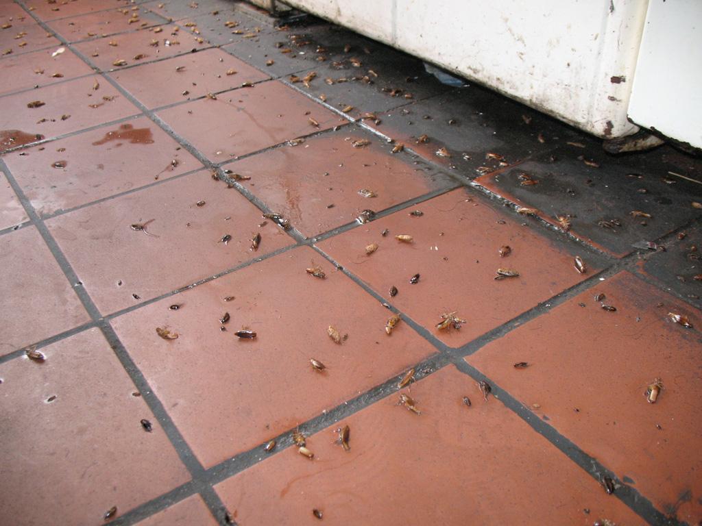 Нашествие тараканов в доме