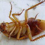 Действие нашатырного спирта на тараканов