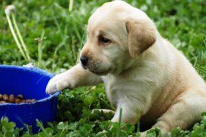 питание маленькой собаки