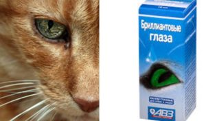 Глаза рыжей кошки