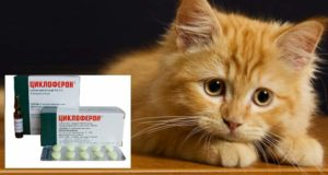Препарат циклоферон для кошек