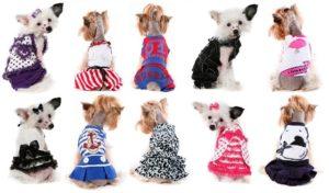 виды одежды для собак