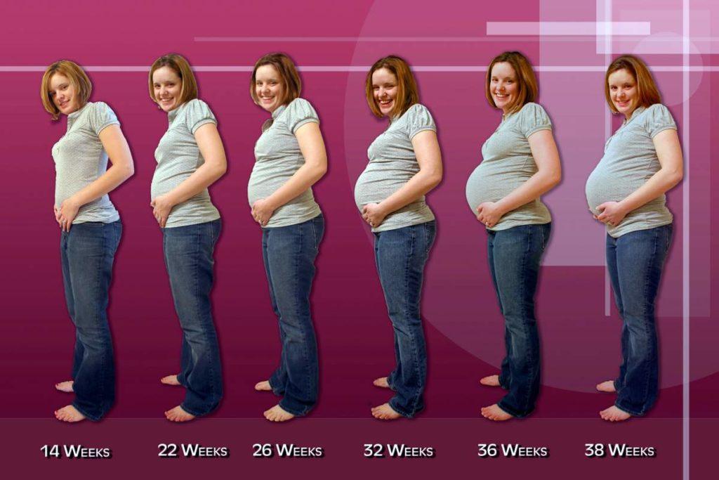 На какой неделе беременности начинает расти животик