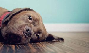запор у собаки распространенные причины
