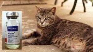 «Скорая помощь» при кошачьих загулах: Подробности выбора +Видео и Фото