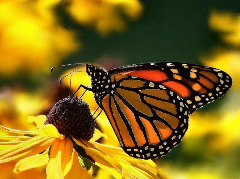 Фотография с бабочкой