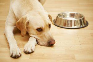 рвота с поносом и температурой у собаки