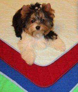 стоимость пеленок для собак