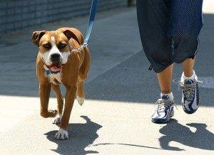 как правильно выгуливать собаку в городе