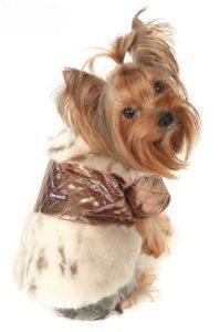 особенности одежды для собак