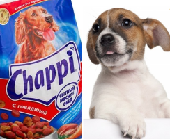 чаппи и собака