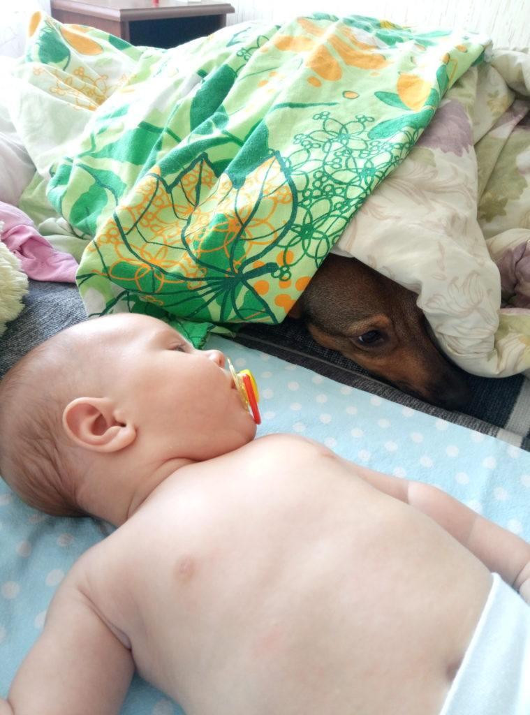Ребенок и домашние животные: за и против. Почему нельзя отказывать детям в общении с нашими питомцами?