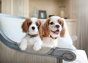 подходящие породы собак для содержания в квартире