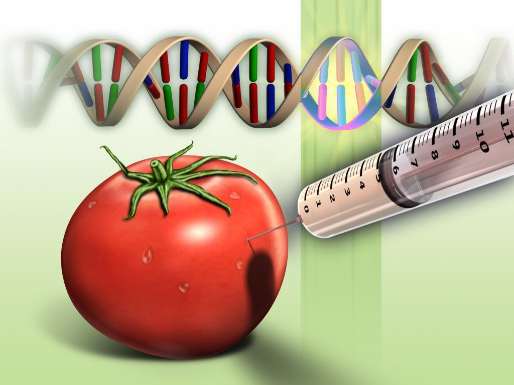 Иллюстрация искусственного изменения ДНК помидоров