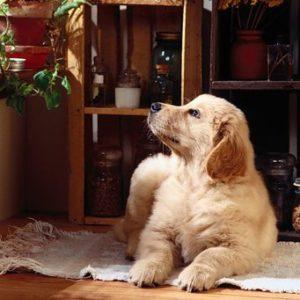 профилактика собаки от блох