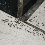Муравьи в доме на плитке