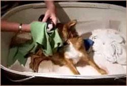 подготовка хозяина к родам собаки