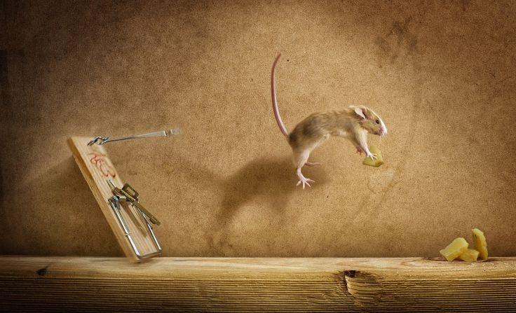 Мышь выпрыгнула из мышеловки