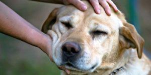 заражение гельминтами от собаки