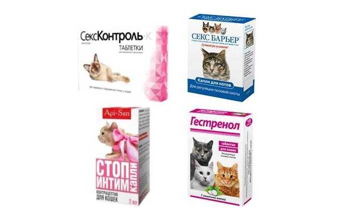 4 контрасекса