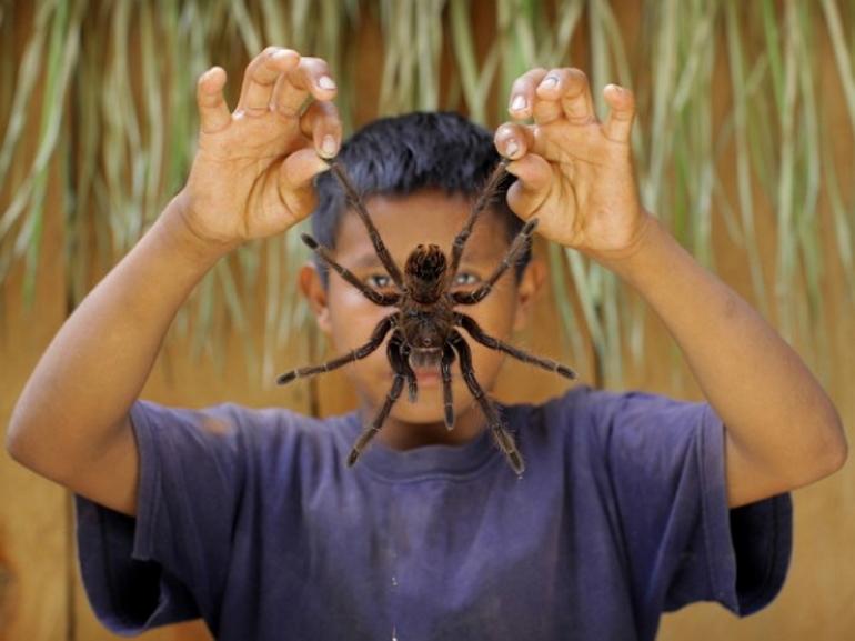 Чем питаются тарантул