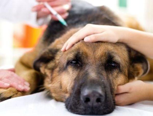 Собачий клещ может вызвать немало проблем