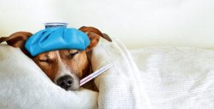 опасные болезни с высокой температурой