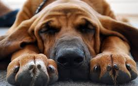 как провести эвтаназию собаке самому