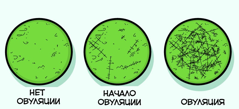 Как же точно определить овуляцию?
