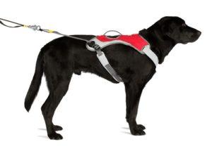 шлейка для крупной собаки