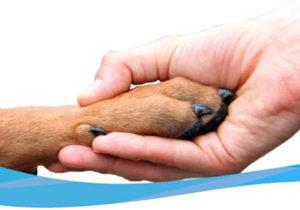сколько стоит эвтаназия собаки