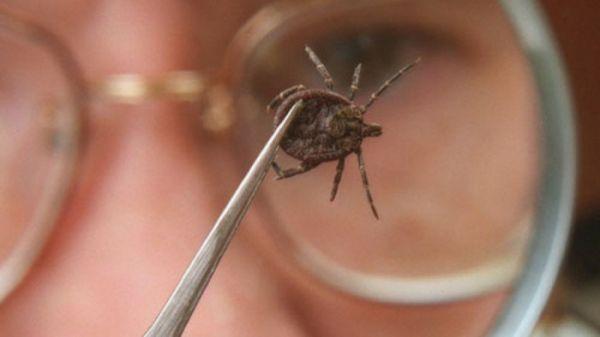 Клещи - представители семейства паукообразных