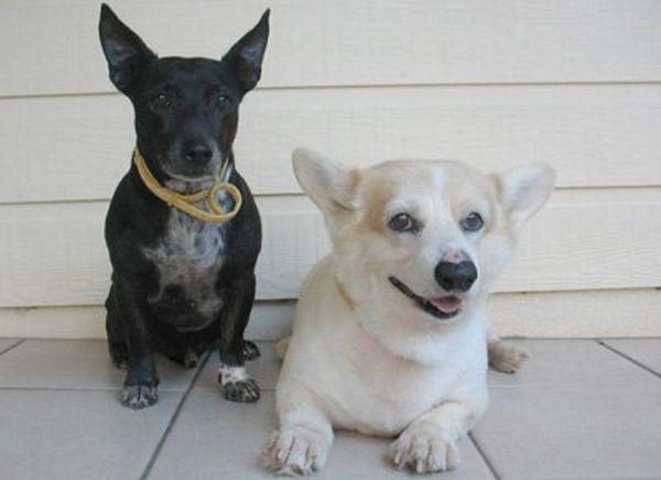 Собак нужно защитить от клещей и блох