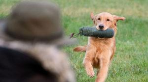 команда апорт для собаки