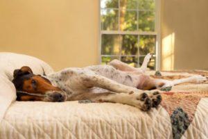 аллергия у собак на медикаменты