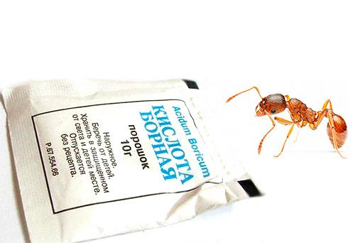 Борная кислота спасает от муравьев