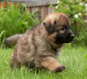 клички для маленьких собак