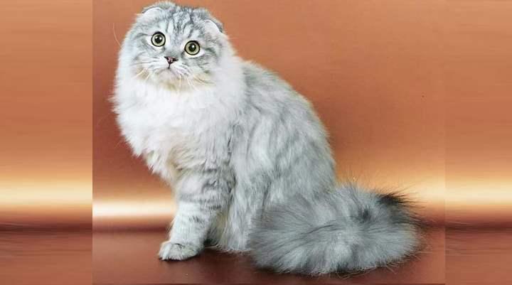 Кот с длинной шерстью