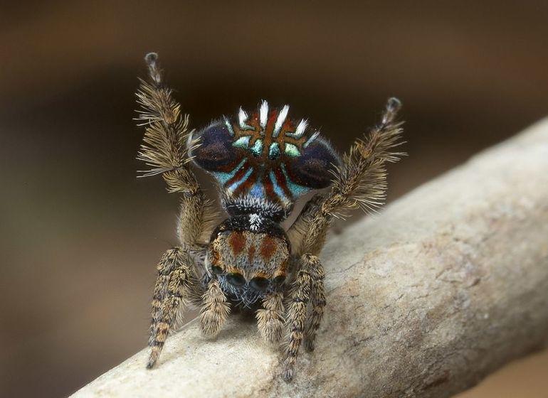 К чему снится красивый паук
