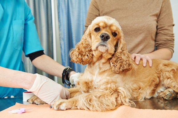 Ветеринар может поставить правильный диагноз любимцу
