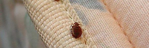 Склонные к аллергии люди страдают от постельных клещей