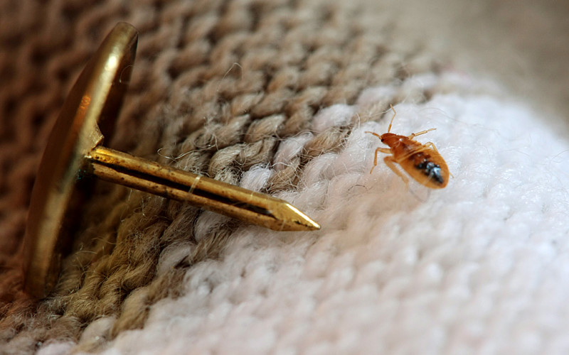 Размеры насекомого в сравнении