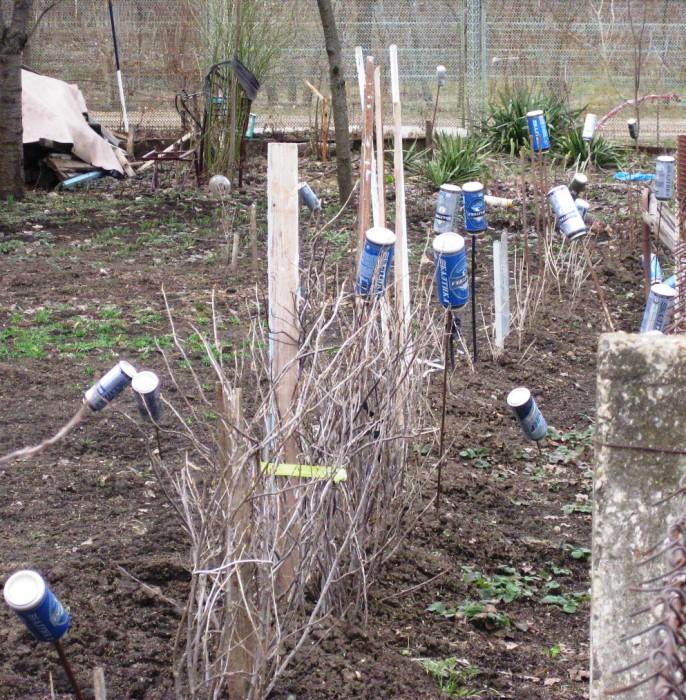 Отпугиватели кротов на огороде