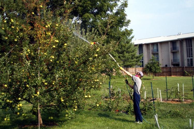 Процесс осенней обработки яблонь